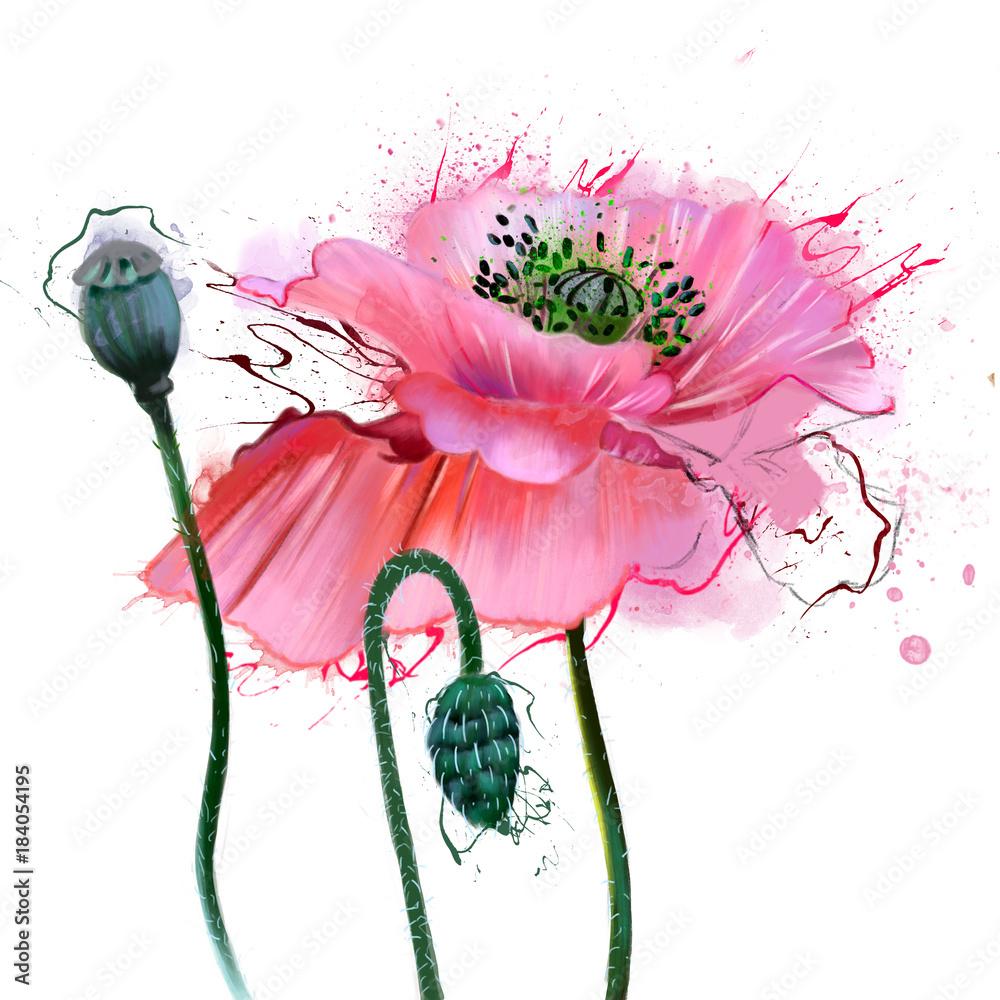 Piękne maki w delikatnych akwarelach, zbliżenie, z plamami farby <span>plik: #184054195   autor: pacrovka</span>