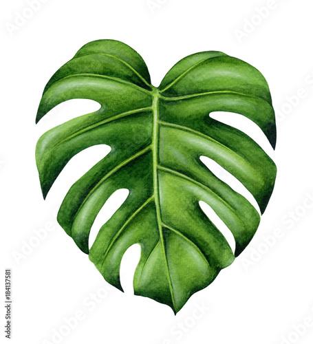 Fotografiet Green monstera leaf