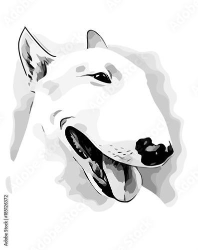 Fotografia Dog of breed Bull terrier