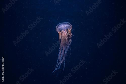 Jellyfish Fototapeta