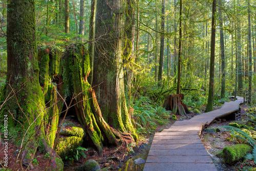 Fototapeta premium Szlak turystyczny przez las w Lynn Canyon Park Vancouver BC Kanada