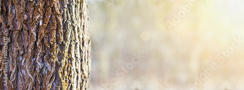 Photo Tree trunk close-up in the forest - web banner with copy space