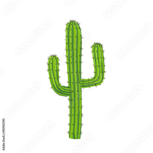 Traditional cactus plant with needles. Travel to Mexico.