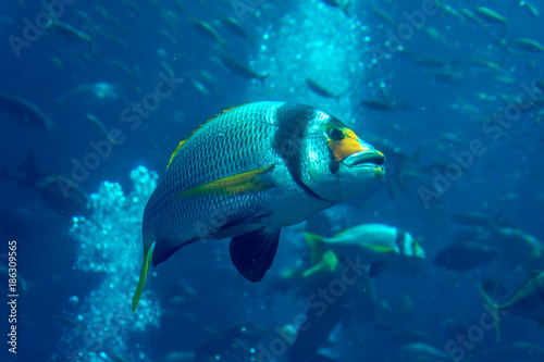 Emirats Arabes Unis, Dubai, l'atlantis, l'aquarium, majestueux Fotobehang