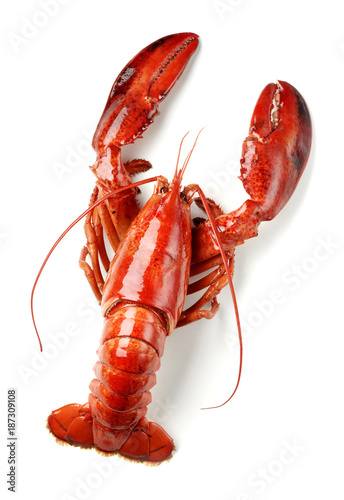 cooked lobster isolated