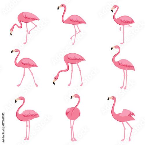 Valokuva Cartoon pink flamingo vector set. Cute flamingos collection
