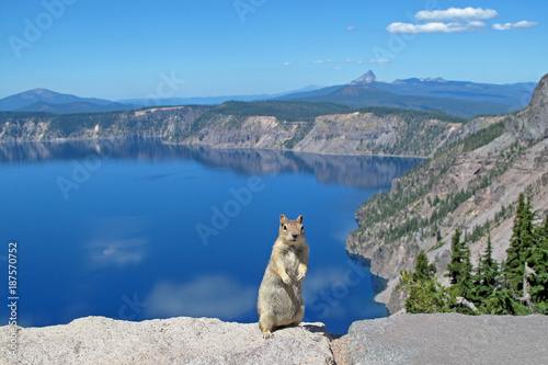 Canvas-taulu Golden mantled ground squirrel or Chipmunk posing in Crater Lake National Park,