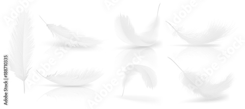 Fotografiet Vector realistic 3d set of white bird or angel feathers in various shapes, isolated on background
