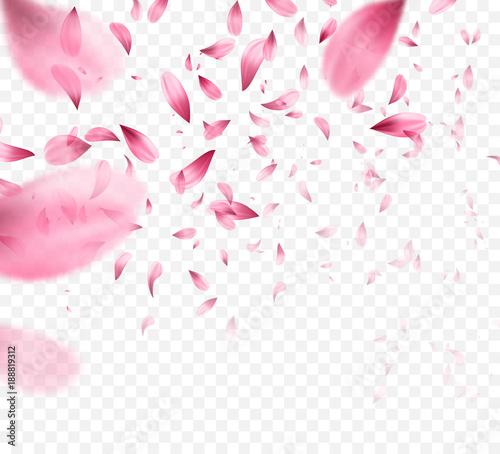 Fotografia Pink sakura falling petals background. Vector illustration
