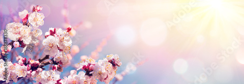 Foto Pink Blossoms Against Sky At Sunrise - Spring Blooming