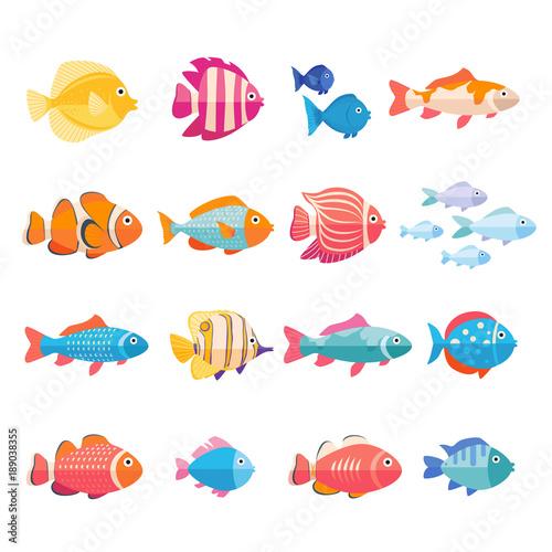 Fotografie, Tablou Colorful aquarium fish set vector isolated