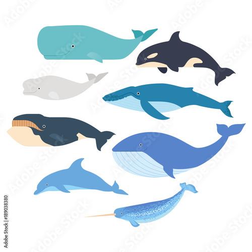 Carta da parati Whales and dolphin set