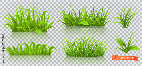 Wall mural Spring, green grass. 3d realistic vector icon set