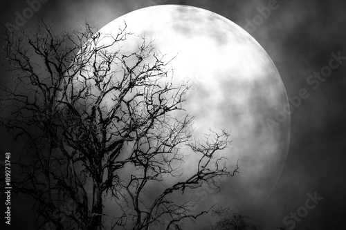 Moon in the night scary in nature.