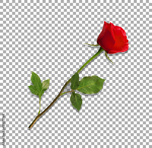 Canvas Print highly detailed flower of red rose isolated on transparent