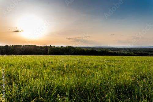 Obraz na plátně Un soleil très bas en été dans la prairie