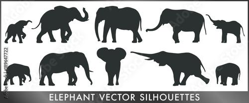 Photo Elephant vector silhouettes
