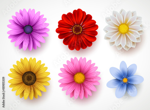 Fotografering Spring flowers colorful vector set isolated in white background