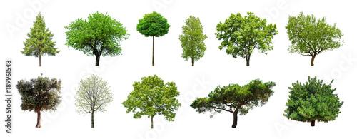 Fotografia, Obraz Set of green trees isolated on white background