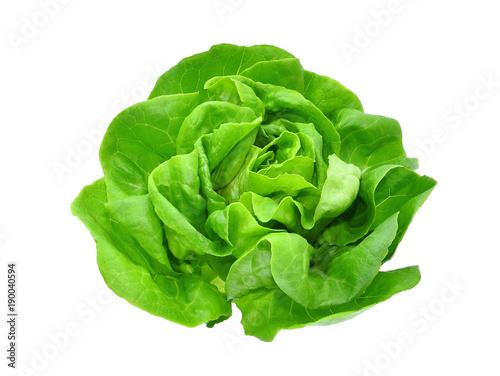 green butter lettuce vegetable or salad isolated on white back ground