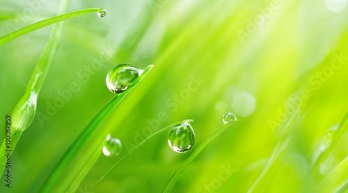 Fototapeta premium Piękne wielkie krople świeża ranek rosy makro- w naturze. Krople przejrzystej wody na trawie. Tło wiosna z miejsca na kopię.