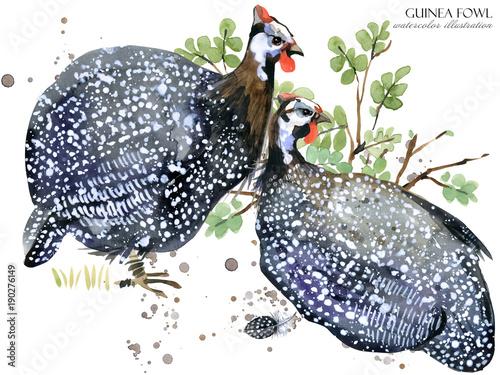 Photo guinea fowl bird watercolor illustration