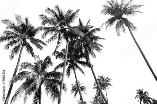 Black and white silhouettes tropical coconut palm trees isolated
