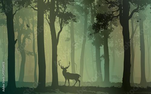 Fototapeta premium Las liściasty z ptakami i jeleniami