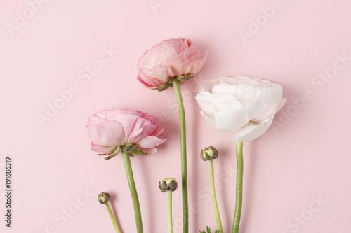 Wallpaper Mural Pink ranunculus flowers