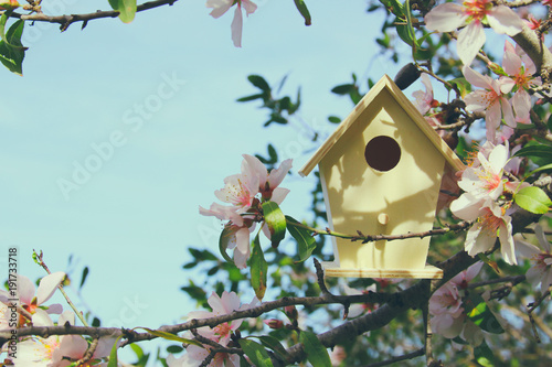 Photographie Little birdhouse in spring over blossom cherry tree.