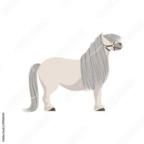 Photo White pony with grey mane, thoroughbred horse vector Illustration