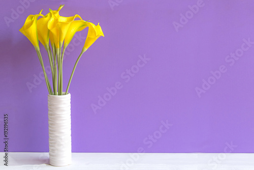 Purple wall with calla lily yellow flower on shelf white wood, copy space for text. Still life Concept