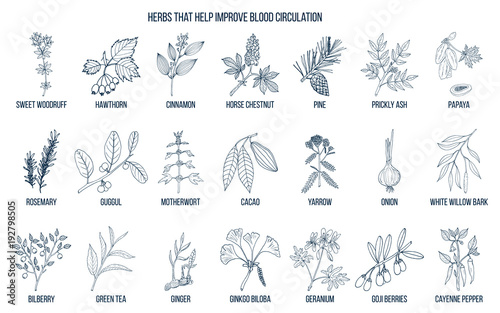 Fototapeta Collection of natural herbs for blood circulation