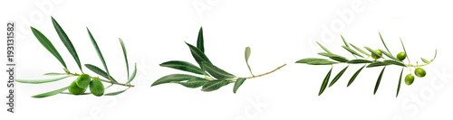 Set of green olive branch photos, isolated on white