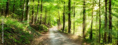 Photo Grünes Wald Panorama im Sonnenlicht