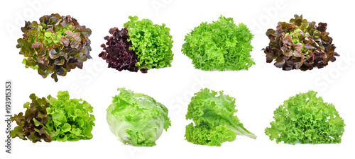 set of lettuce vegetable isolated on white background