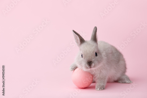 Fototapeta Easter bunny rabbit with pink painted egg on pink background