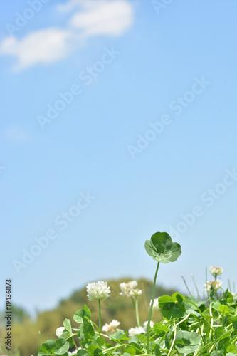 四つ葉のクローバー 青空