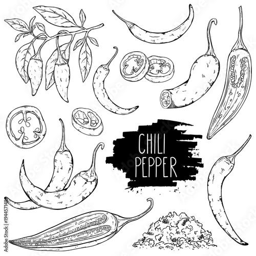 Hand drawn hot chili pepper set Fototapeta