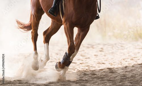 Fotografia A horse riding in the autumn