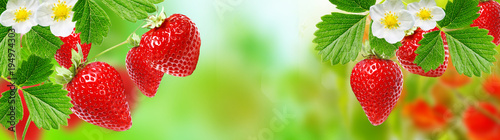 gardening strawberry