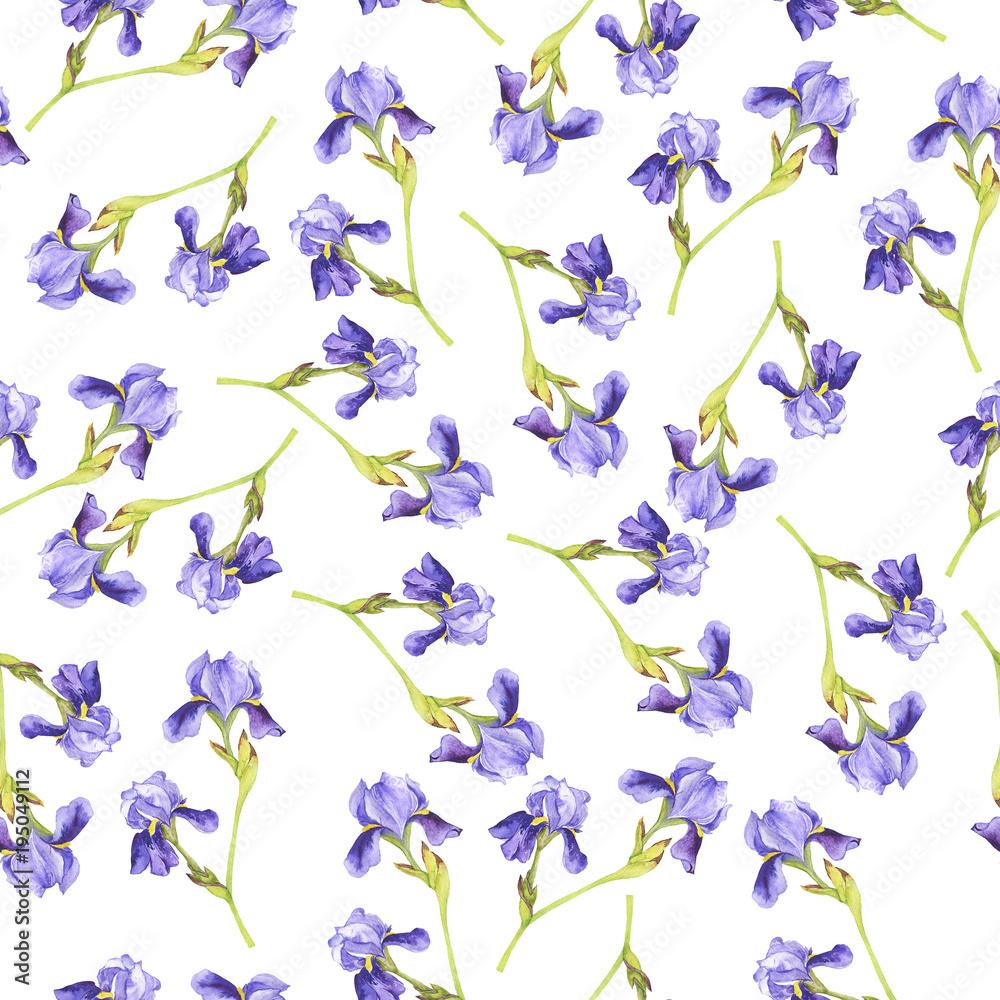 Fototapeta Bezszwowy wzór z lilym irysem kwitnie na białym t