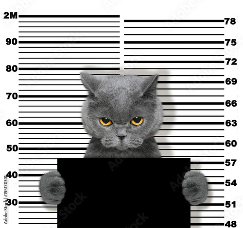 Bad cat at the police station. Photo on white