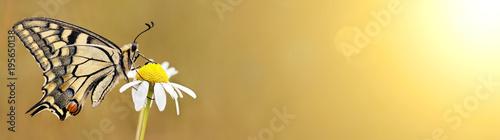 Fototapeta premium Piękny motyl siedzi na kwiat - baner internetowy wiosny, koncepcja lato