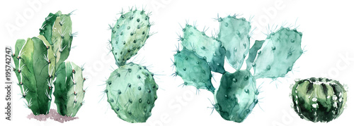 Fotografie, Obraz Watercolor set of cactus  isolated illustration on a white background