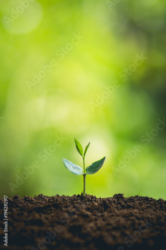 Young plant tree in nature