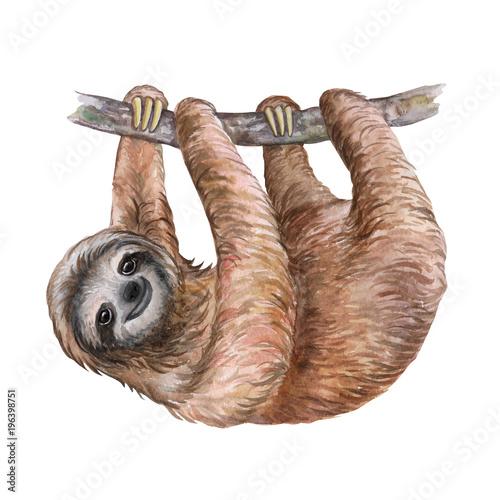 Wallpaper Mural Watercolor sloth illustration