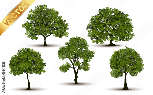 Wall mural Collection  Beautiful tree Realistic  on a white background.