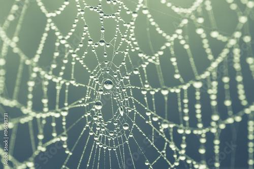 Obraz na płótnie spider web background
