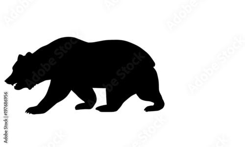 Canvas Print California Bear